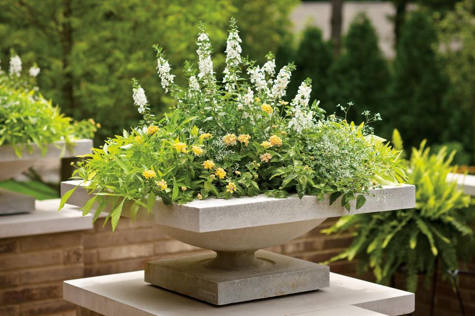 Container Garden in modern cement planter